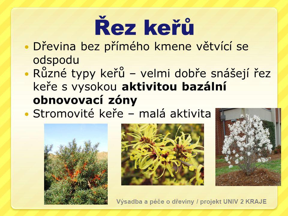 Řez keřů  Dřevina bez přímého kmene větvící se odspodu  Různé typy keřů – velmi dobře snášejí řez keře s vysokou aktivitou bazální obnovovací zóny  Stromovité keře – malá aktivita Výsadba a péče o dřeviny / projekt UNIV 2 KRAJE