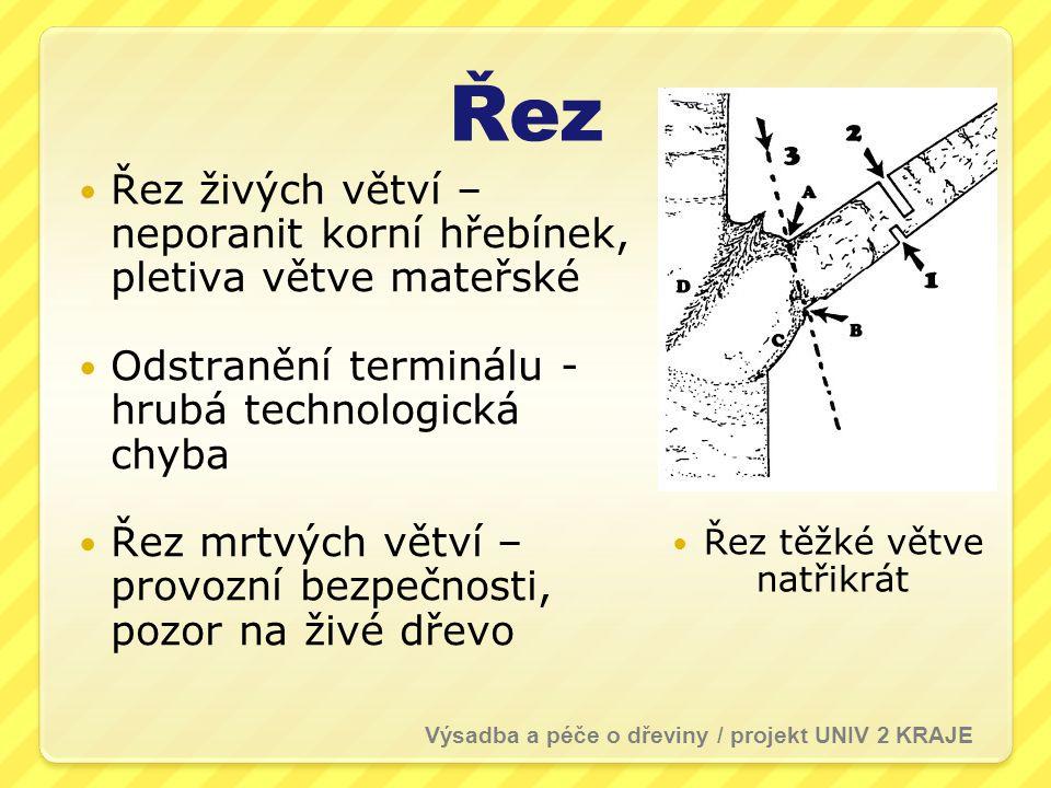 Řez  Řez živých větví – neporanit korní hřebínek, pletiva větve mateřské  Odstranění terminálu - hrubá technologická chyba  Řez mrtvých větví – provozní bezpečnosti, pozor na živé dřevo  Řez těžké větve natřikrát Výsadba a péče o dřeviny / projekt UNIV 2 KRAJE