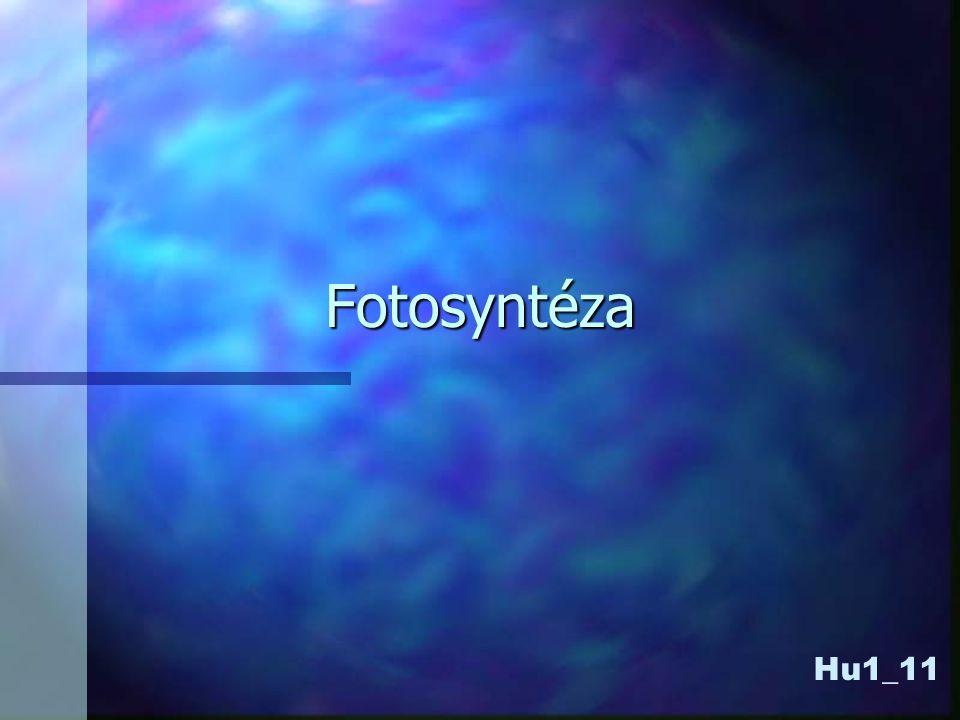 Asimilační barviva •chlorofyl a •chlorofyl b •pomocná fotosyntetizující barviva •fykocyan •fykoeritrin •xantofyly •karotenoidy