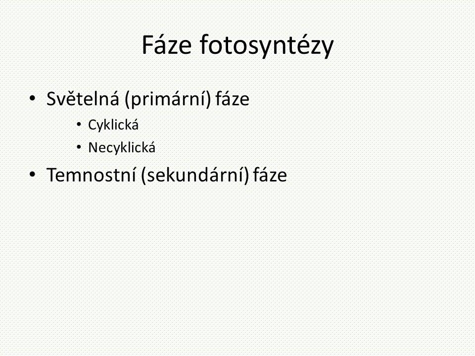 Fáze fotosyntézy • Světelná (primární) fáze • Cyklická • Necyklická • Temnostní (sekundární) fáze