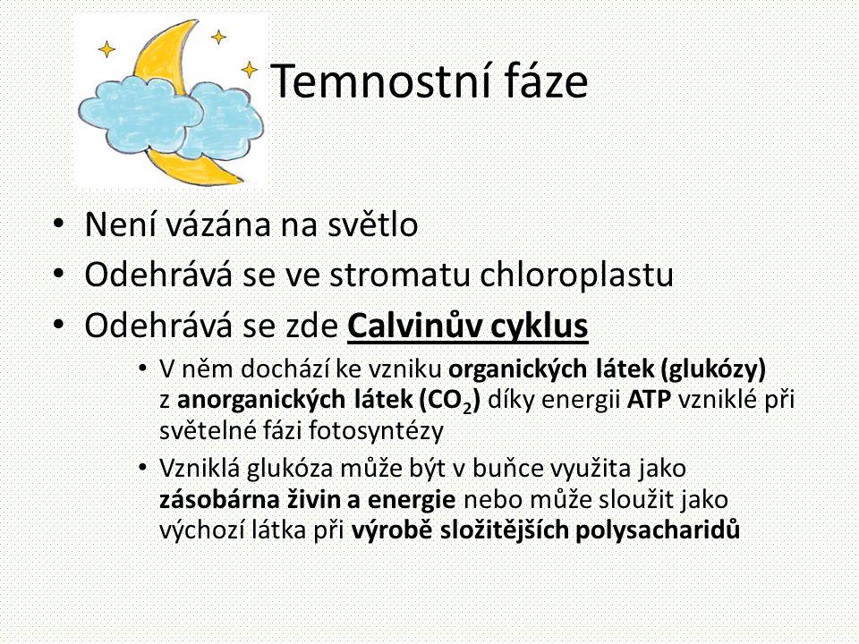 Temnostní fáze • Není vázána na světlo • Odehrává se ve stromatu chloroplastu • Odehrává se zde Calvinův cyklus • V něm dochází ke vzniku organických