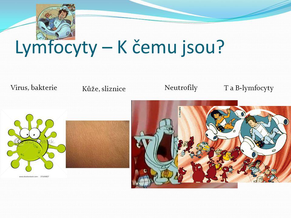 Lymfocyty – K čemu jsou? Kůže, sliznice Neutrofily T a B-lymfocyty Virus, bakterie