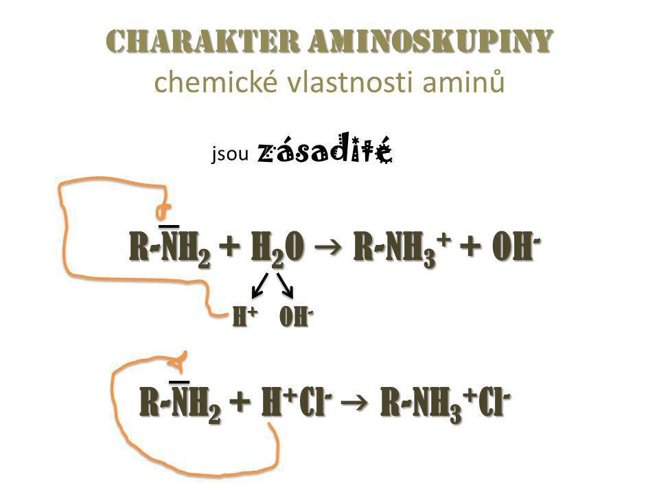 Charakter aminoskupiny Charakter aminoskupiny chemické vlastnosti aminů jsou zásadité R-NH 2 + H 2 O  R-NH 3 + + OH - R-NH 2 + H + Cl -  R-NH 3 + Cl