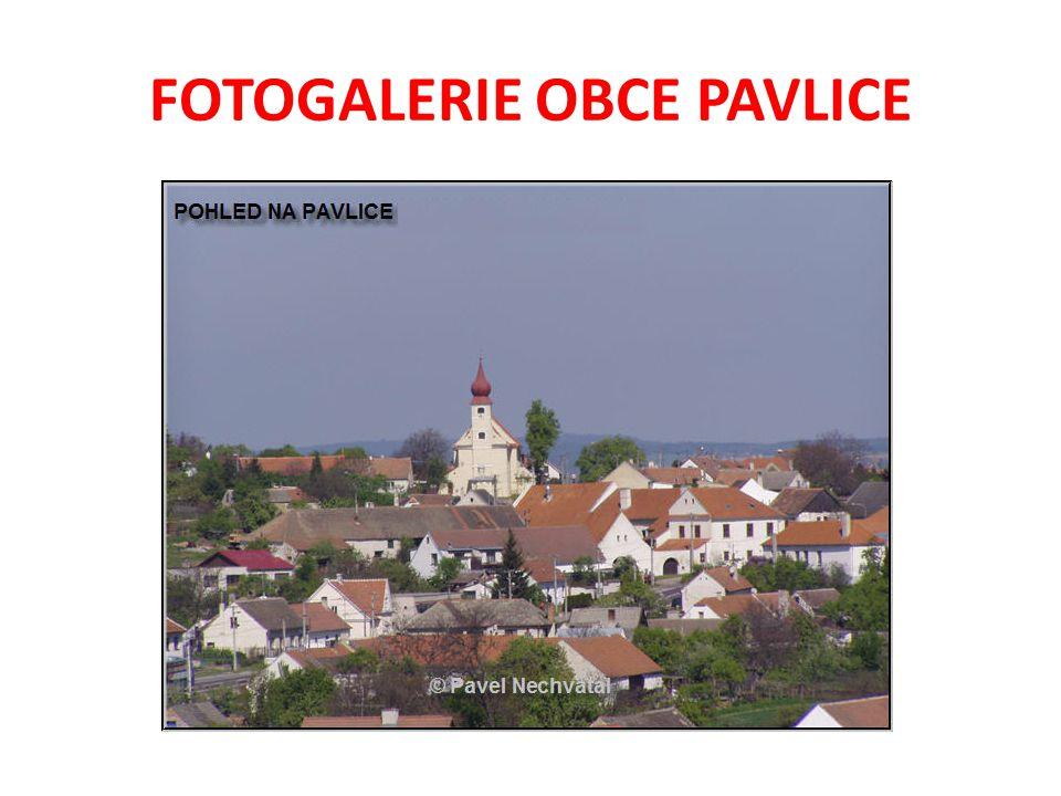 FOTOGALERIE OBCE PAVLICE