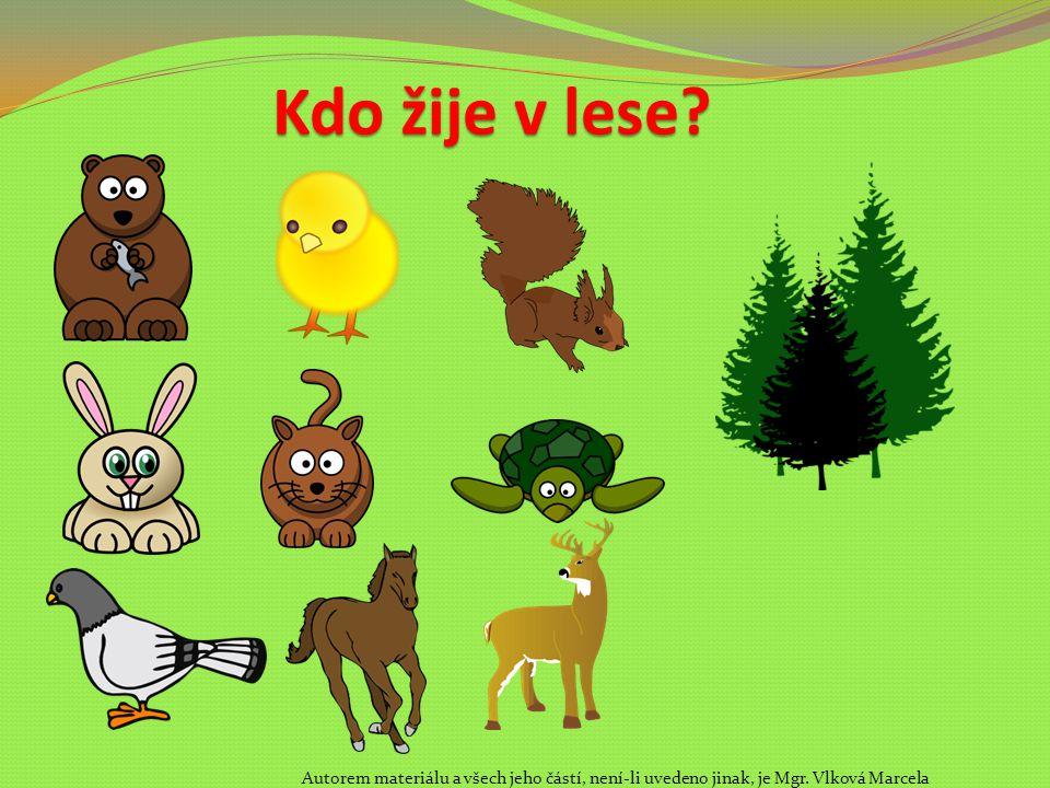 Kdo žije v lese? Autorem materiálu a všech jeho částí, není-li uvedeno jinak, je Mgr. Vlková Marcela