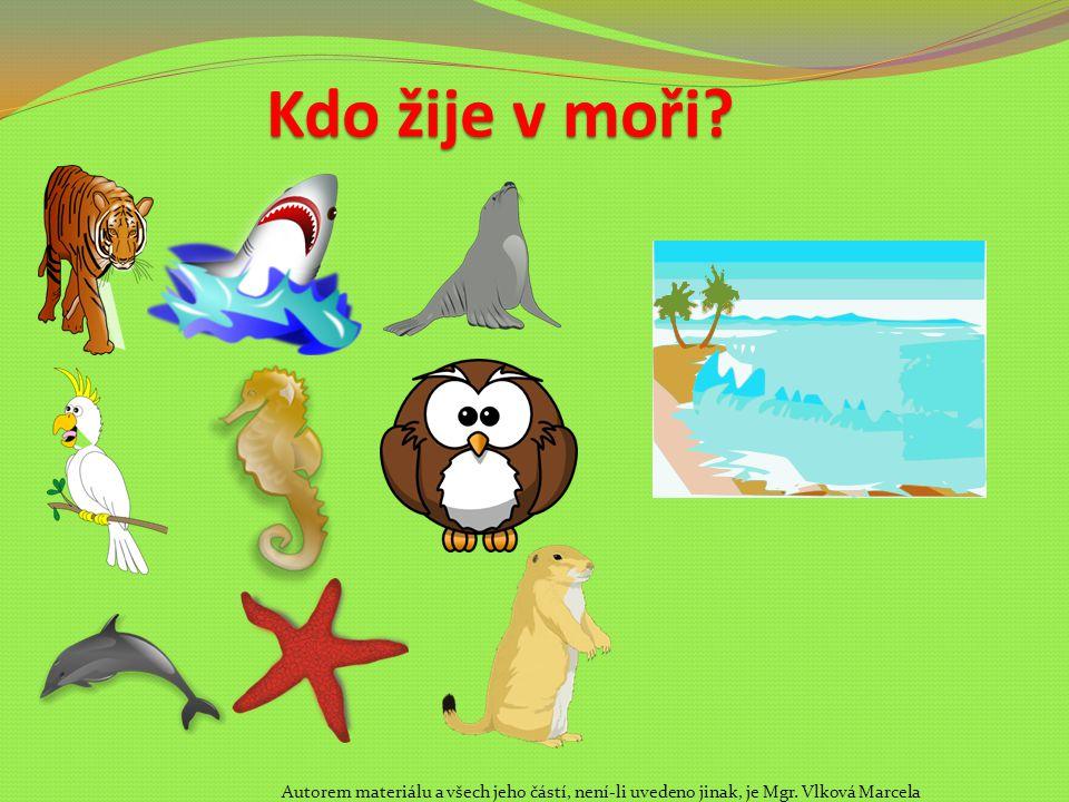 Kdo žije v moři? Autorem materiálu a všech jeho částí, není-li uvedeno jinak, je Mgr. Vlková Marcela