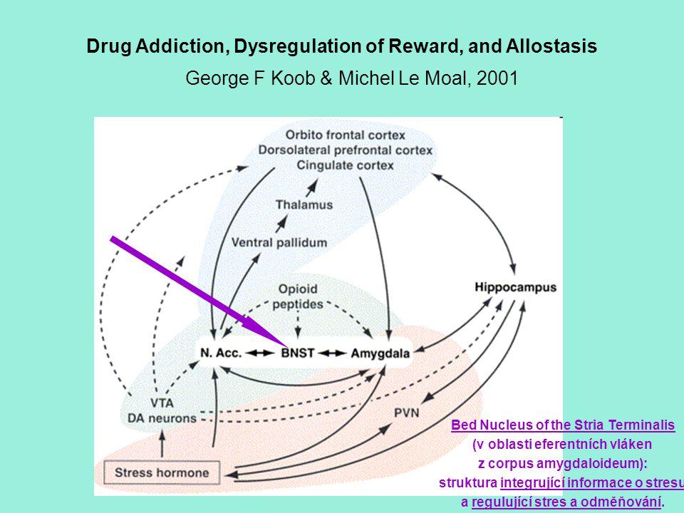 Drug Addiction, Dysregulation of Reward, and Allostasis George F Koob & Michel Le Moal, 2001 Bed Nucleus of the Stria Terminalis (v oblasti eferentníc