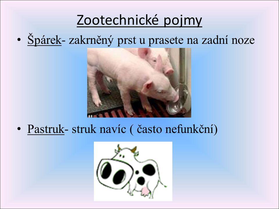 Zootechnické pojmy Špárek- zakrněný prst u prasete na zadní noze Pastruk- struk navíc ( často nefunkční)