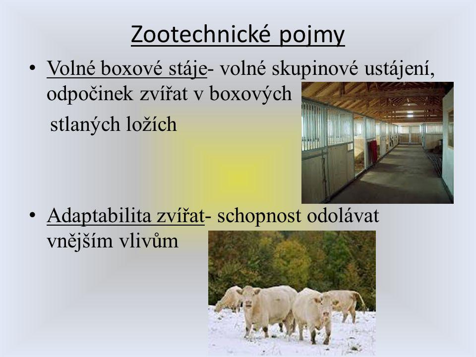 Zootechnické pojmy Volné boxové stáje- volné skupinové ustájení, odpočinek zvířat v boxových stlaných ložích Adaptabilita zvířat- schopnost odolávat v