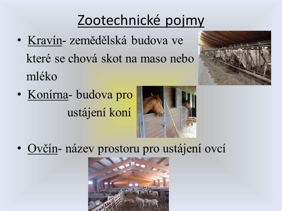 Zootechnické pojmy Kravín- zemědělská budova ve které se chová skot na maso nebo mléko Konírna- budova pro ustájení koní Ovčín- název prostoru pro ust