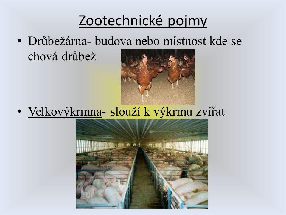 Zootechnické pojmy Drůbežárna- budova nebo místnost kde se chová drůbež Velkovýkrmna- slouží k výkrmu zvířat