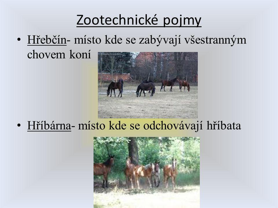 Zootechnické pojmy Hřebčín- místo kde se zabývají všestranným chovem koní Hříbárna- místo kde se odchovávají hříbata