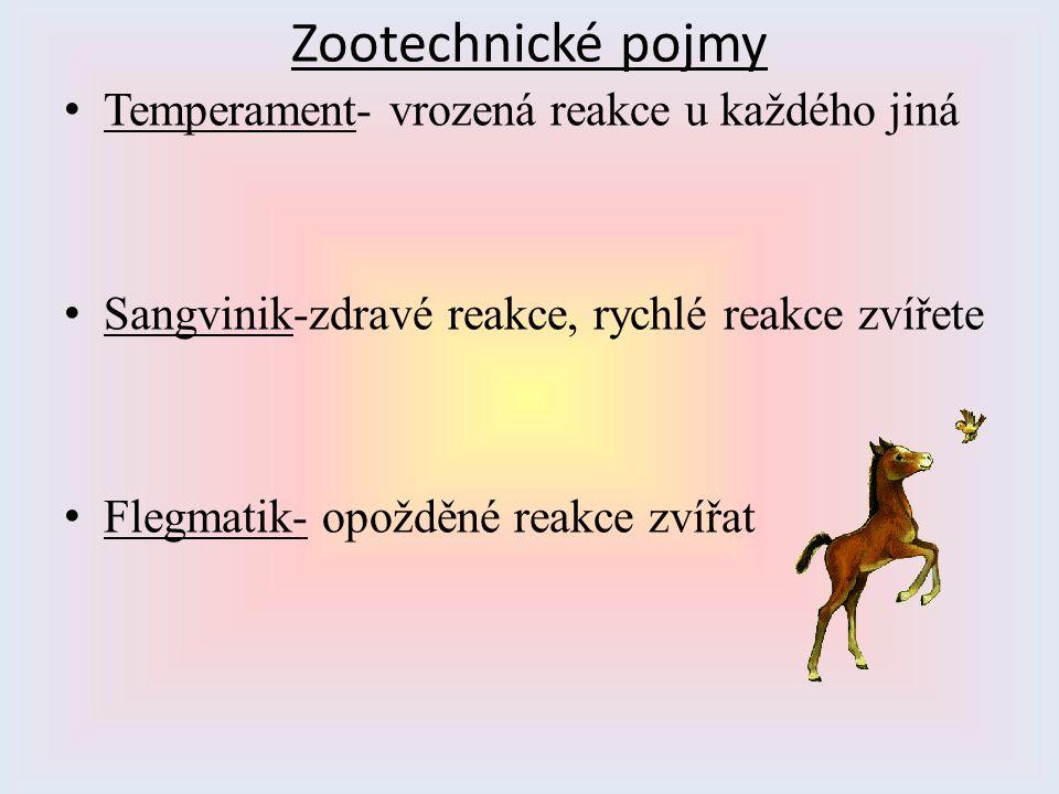 Zootechnické pojmy Temperament- vrozená reakce u každého jiná Sangvinik-zdravé reakce, rychlé reakce zvířete Flegmatik- opožděné reakce zvířat