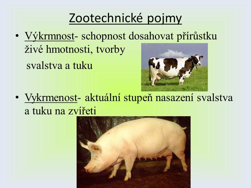 Zootechnické pojmy Výkrmnost- schopnost dosahovat přírůstku živé hmotnosti, tvorby svalstva a tuku Vykrmenost- aktuální stupeň nasazení svalstva a tuk