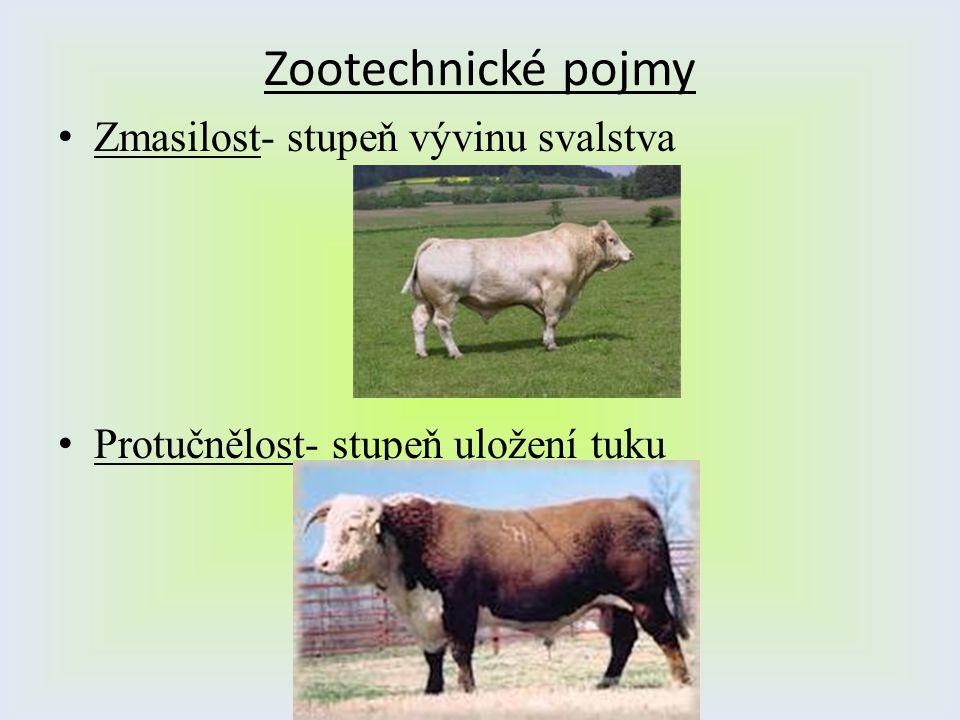 Zootechnické pojmy Zmasilost- stupeň vývinu svalstva Protučnělost- stupeň uložení tuku
