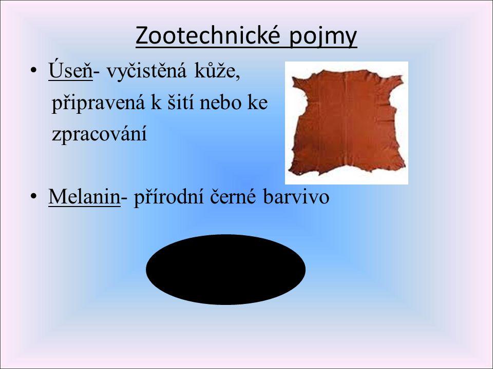 Zootechnické pojmy Úseň- vyčistěná kůže, připravená k šití nebo ke zpracování Melanin- přírodní černé barvivo