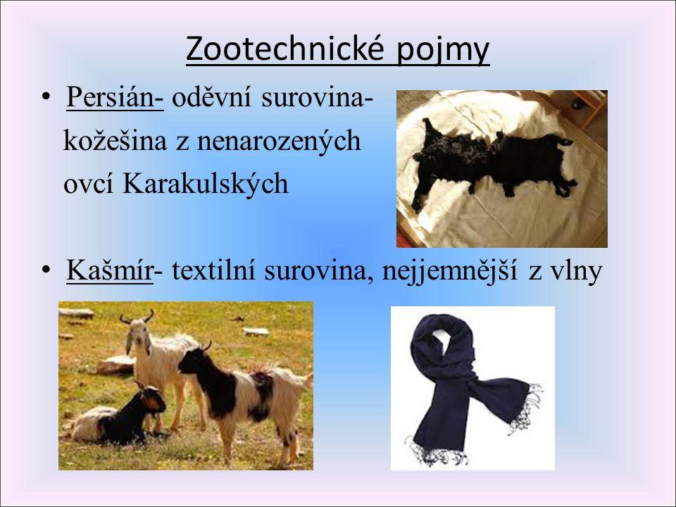 Zootechnické pojmy Persián- oděvní surovina- kožešina z nenarozených ovcí Karakulských Kašmír- textilní surovina, nejjemnější z vlny