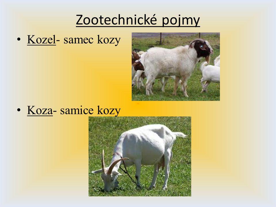 Zootechnické pojmy Kozel- samec kozy Koza- samice kozy
