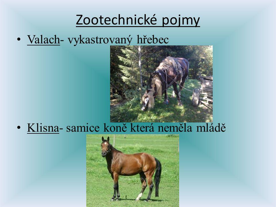 Valach- vykastrovaný hřebec Klisna- samice koně která neměla mládě