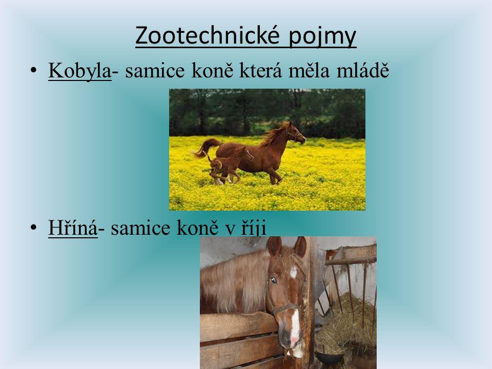 Zootechnické pojmy Kobyla- samice koně která měla mládě Hříná- samice koně v říji