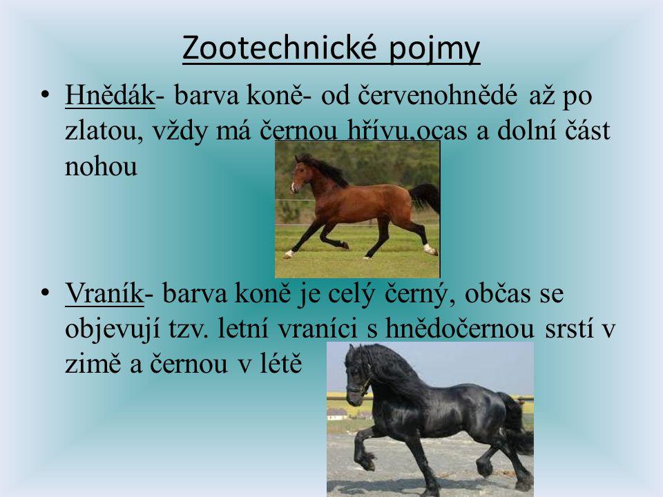 Zootechnické pojmy Hnědák- barva koně- od červenohnědé až po zlatou, vždy má černou hřívu,ocas a dolní část nohou Vraník- barva koně je celý černý, ob