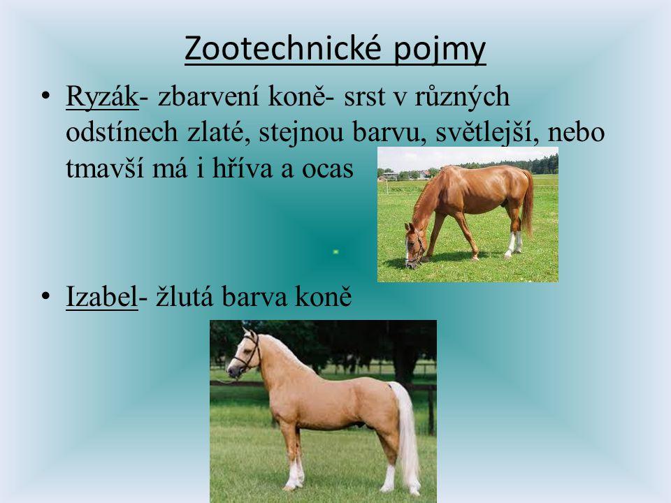 Zootechnické pojmy Ryzák- zbarvení koně- srst v různých odstínech zlaté, stejnou barvu, světlejší, nebo tmavší má i hříva a ocas Izabel- žlutá barva k