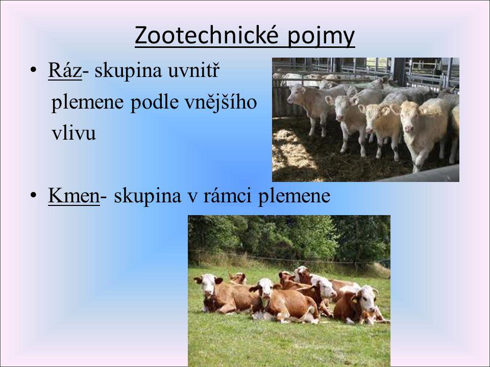 Zootechnické pojmy Ráz- skupina uvnitř plemene podle vnějšího vlivu Kmen- skupina v rámci plemene