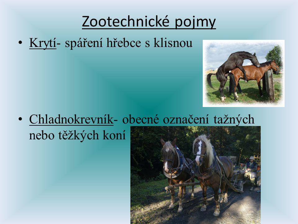 Zootechnické pojmy Krytí- spáření hřebce s klisnou Chladnokrevník- obecné označení tažných nebo těžkých koní