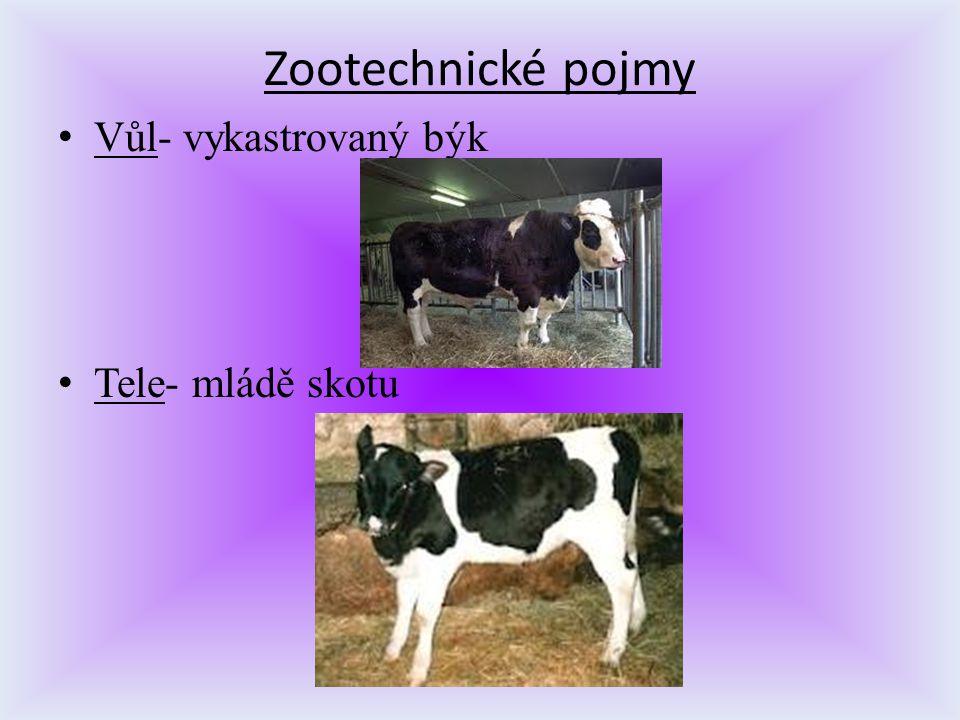 Zootechnické pojmy V ůl- vykastrovaný býk T ele- mládě skotu
