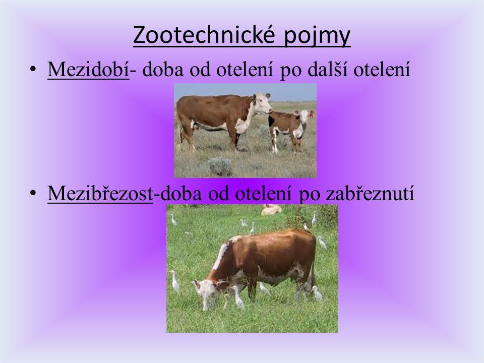 Zootechnické pojmy Mezidobí- doba od otelení po další otelení Mezibřezost-doba od otelení po zabřeznutí