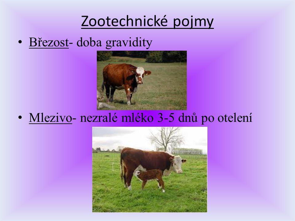 Zootechnické pojmy Březost- doba gravidity Mlezivo- nezralé mléko 3-5 dnů po otelení