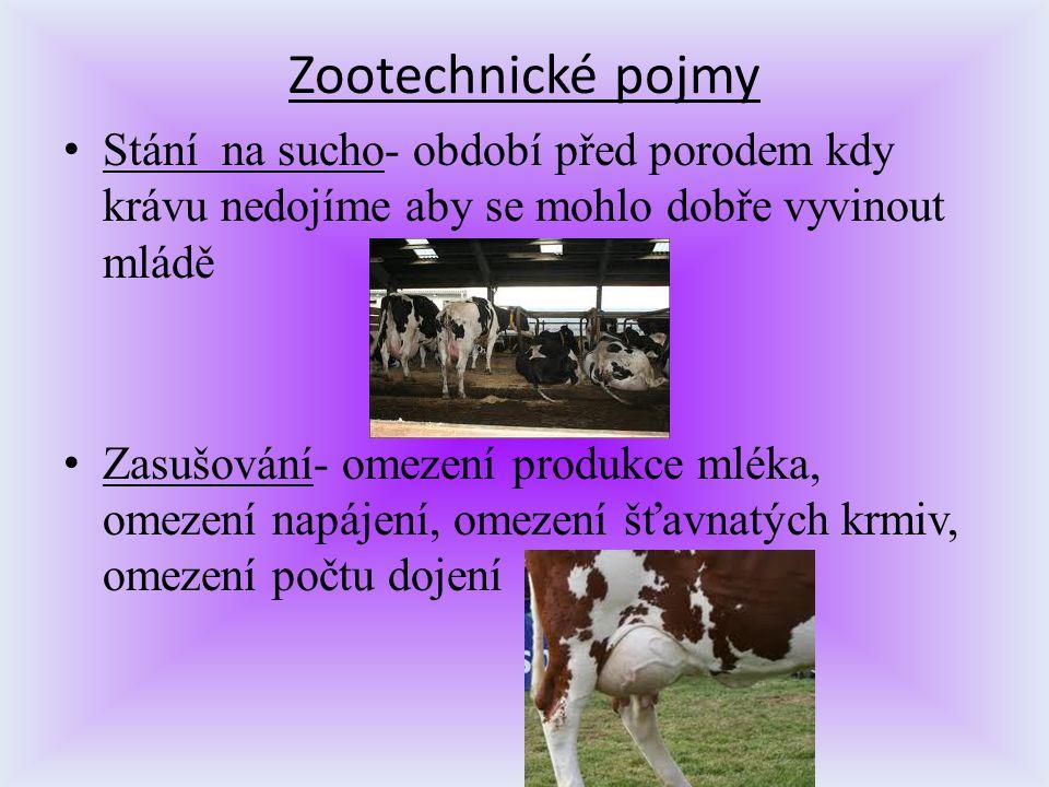Zootechnické pojmy S tání na sucho- období před porodem kdy krávu nedojíme aby se mohlo dobře vyvinout mládě Z asušování- omezení produkce mléka, omez