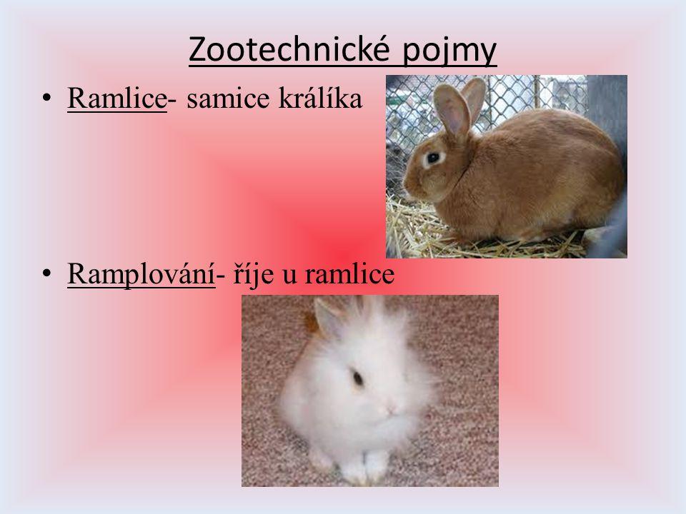 Zootechnické pojmy Ramlice- samice králíka Ramplování- říje u ramlice