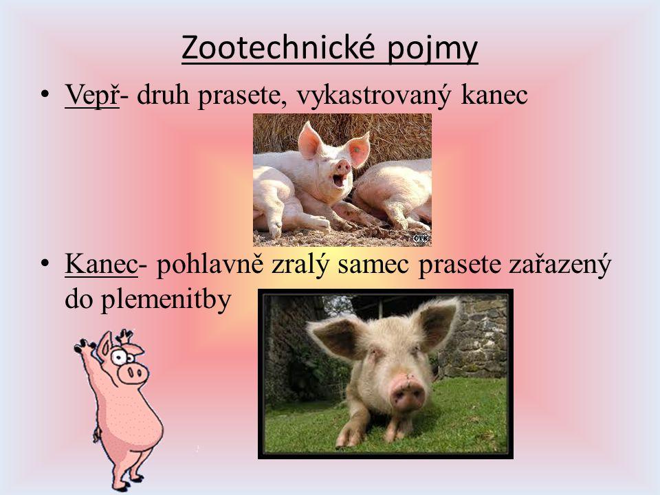 Zootechnické pojmy Vepř- druh prasete, vykastrovaný kanec Kanec- pohlavně zralý samec prasete zařazený do plemenitby