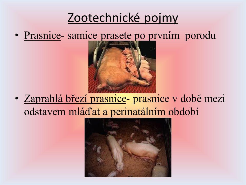 Zootechnické pojmy Prasnice- samice prasete po prvním porodu Zaprahlá březí prasnice- prasnice v době mezi odstavem mláďat a perinatálním období