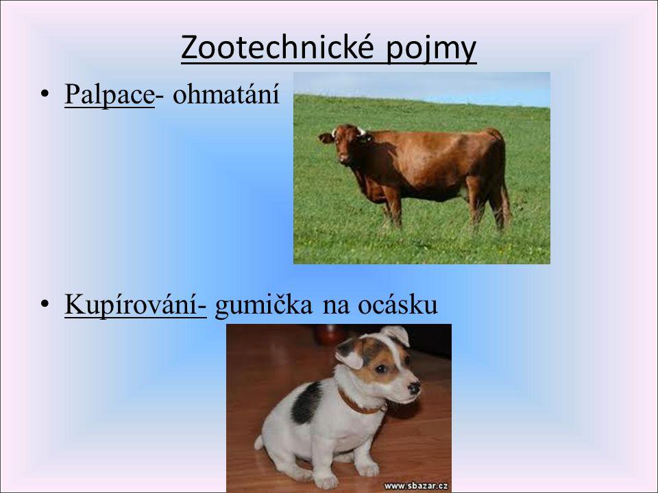 Zootechnické pojmy Palpace- ohmatání Kupírování- gumička na ocásku