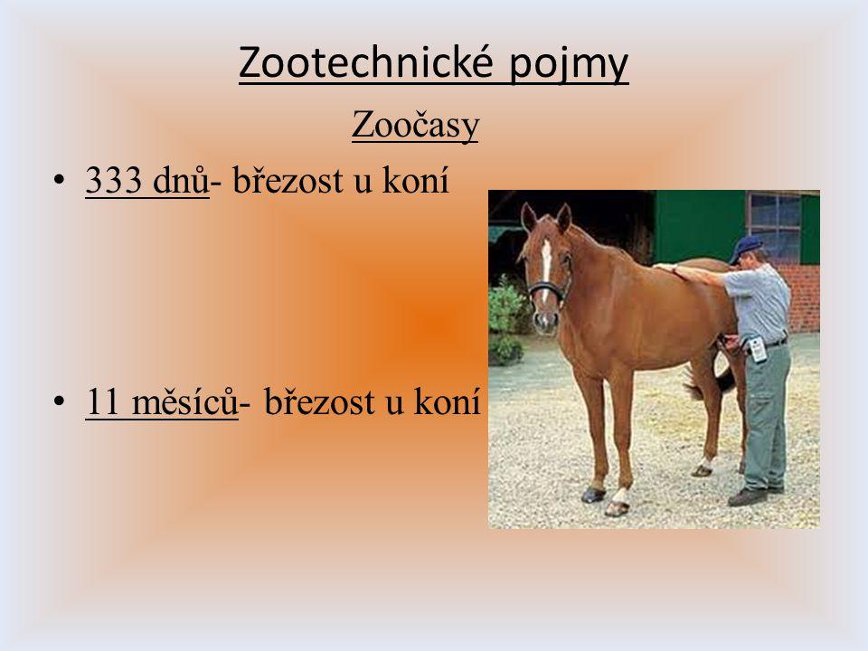 Zootechnické pojmy Zoočasy 333 dnů- březost u koní 11 měsíců- březost u koní
