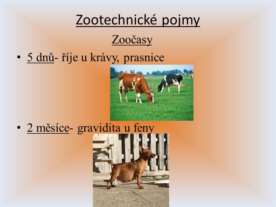 Zootechnické pojmy Zoočasy 5 dnů- říje u krávy, prasnice 2 měsíce- gravidita u feny