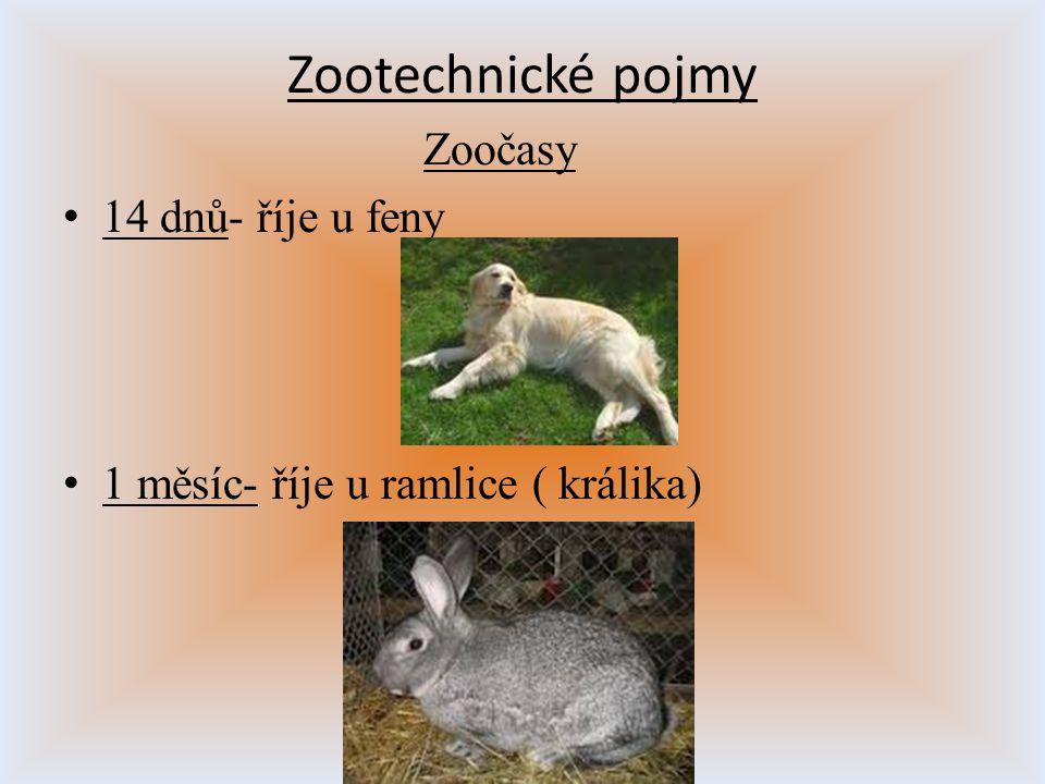 Zootechnické pojmy Zoočasy 14 dnů- říje u feny 1 měsíc- říje u ramlice ( králika)