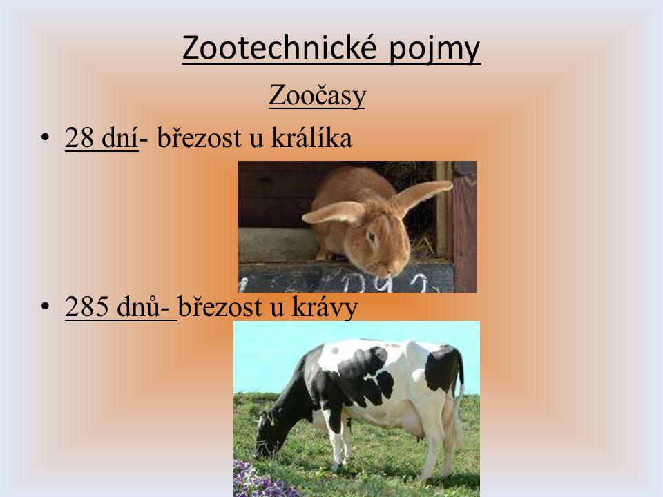 Zootechnické pojmy Zoočasy 28 dní- březost u králíka 285 dnů- březost u krávy