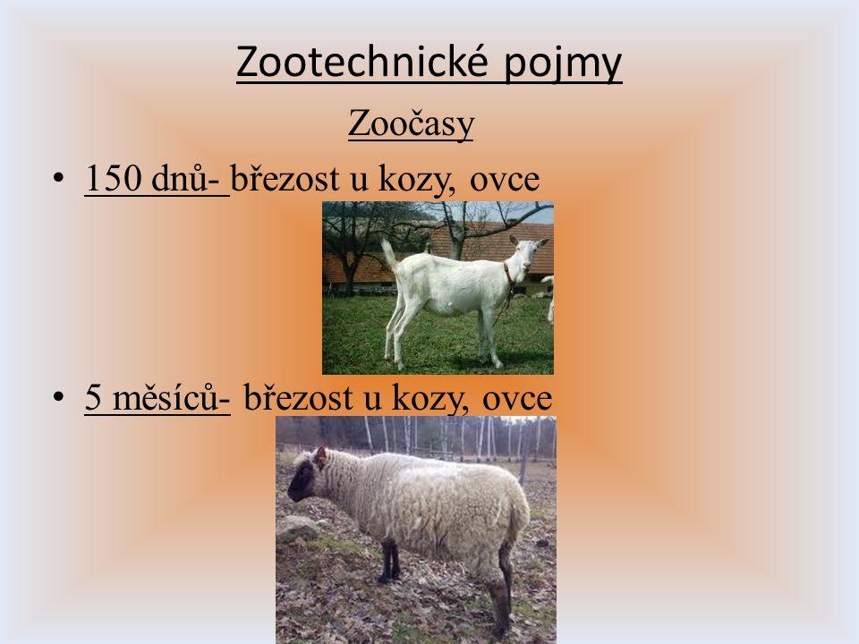 Zootechnické pojmy Zoočasy 150 dnů- březost u kozy, ovce 5 měsíců- březost u kozy, ovce