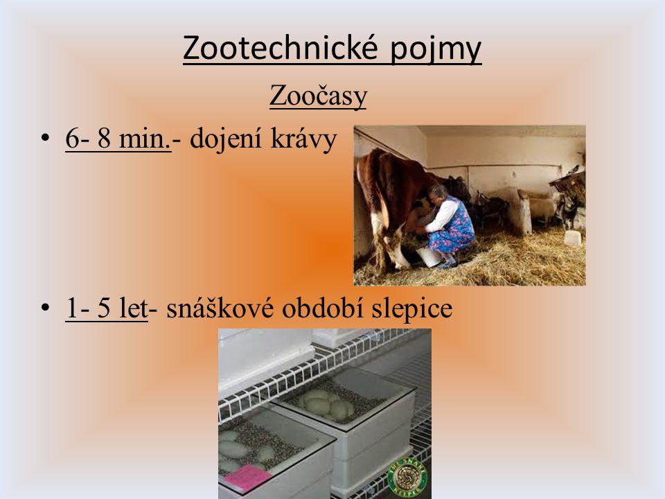 Zoočasy 6- 8 min.- dojení krávy 1- 5 let- snáškové období slepice