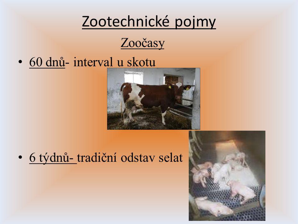 Zootechnické pojmy Zoočasy 60 dnů- interval u skotu 6 týdnů- tradiční odstav selat