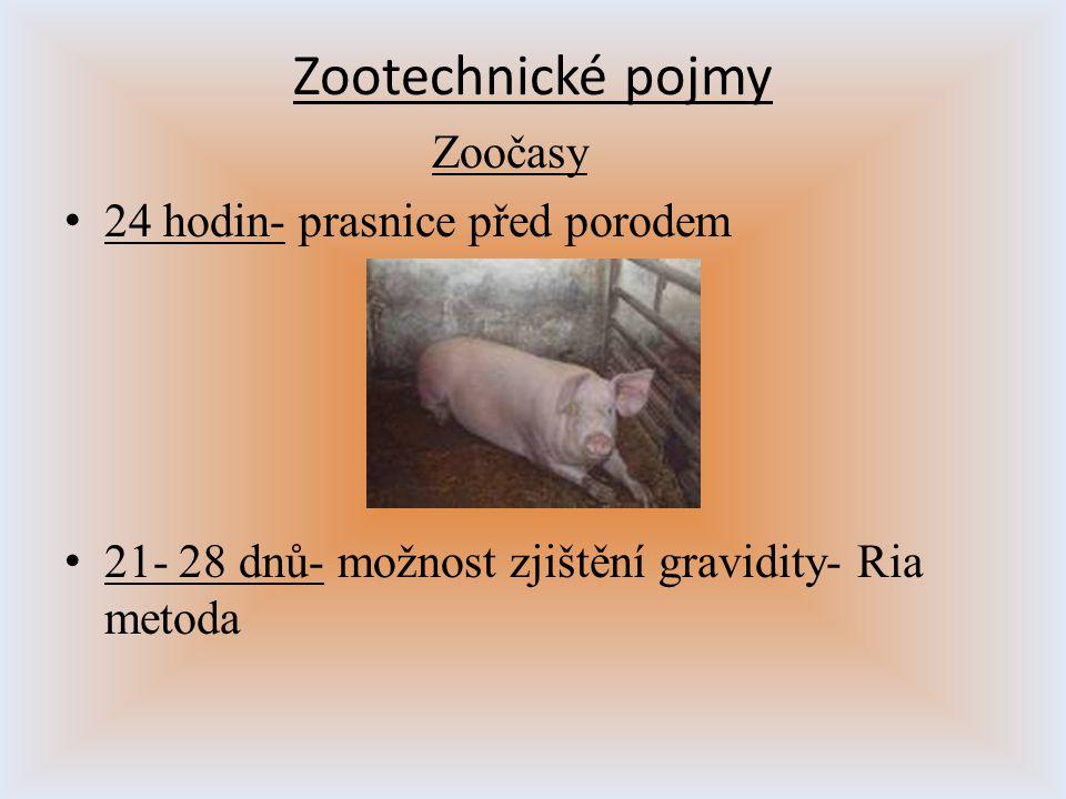 Zootechnické pojmy Zoočasy 24 hodin- prasnice před porodem 21- 28 dnů- možnost zjištění gravidity- Ria metoda