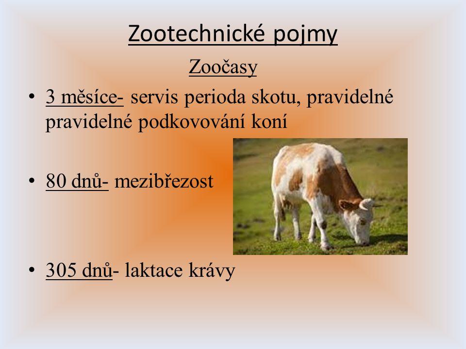 Zootechnické pojmy Zoočasy 3 měsíce- servis perioda skotu, pravidelné pravidelné podkovování koní 80 dnů- mezibřezost 305 dnů- laktace krávy