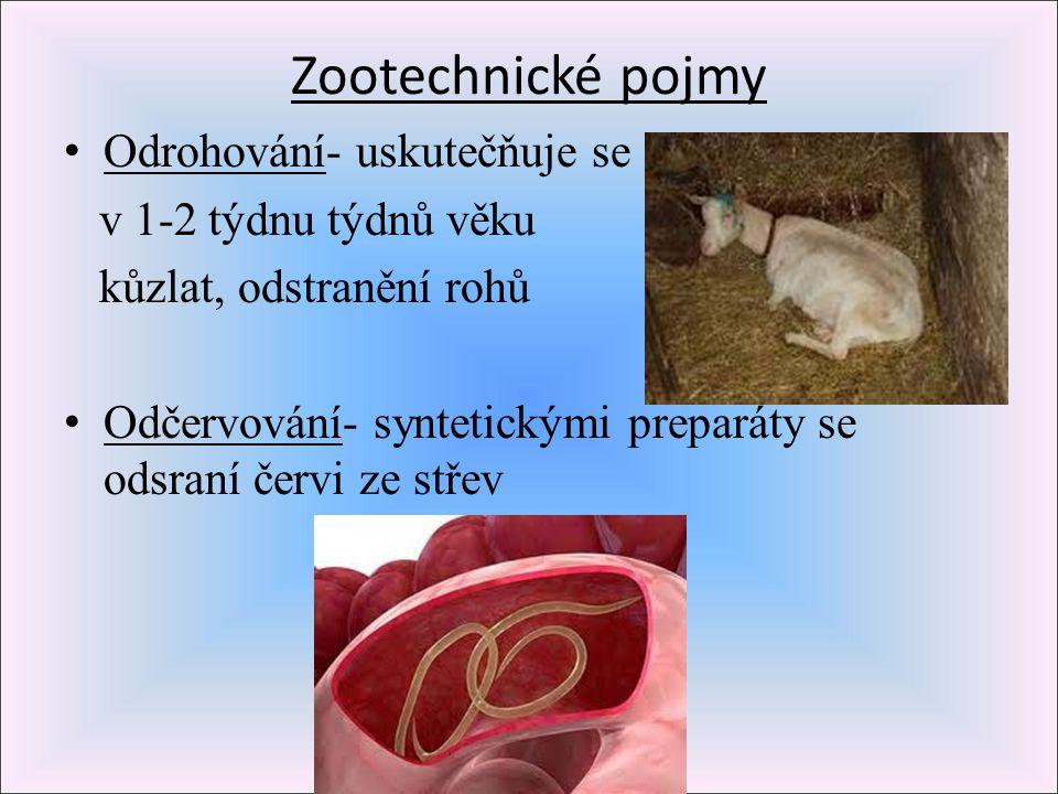Zootechnické pojmy Odrohování- uskutečňuje se v 1-2 týdnu týdnů věku kůzlat, odstranění rohů Odčervování- syntetickými preparáty se odsraní červi ze s