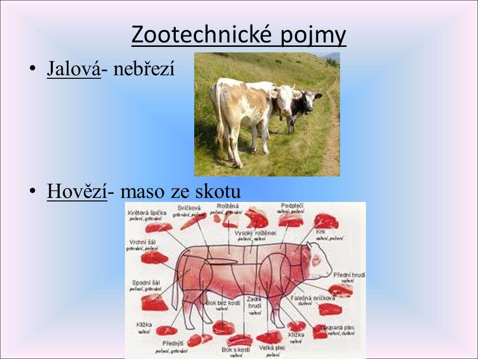 Zootechnické pojmy Jalová- nebřezí Hovězí- maso ze skotu