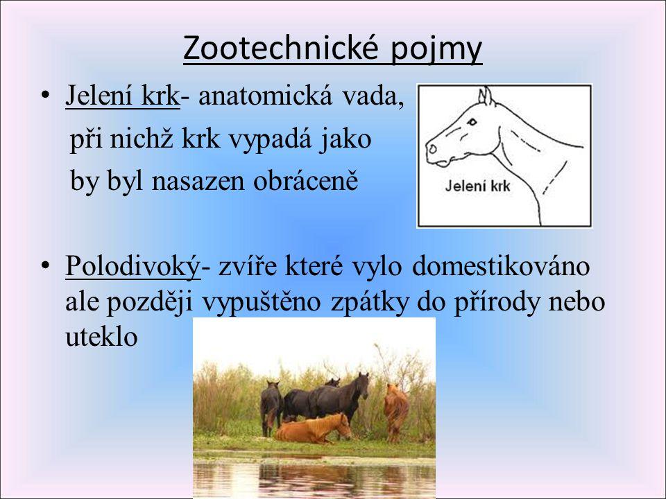 Zootechnické pojmy Jelení krk- anatomická vada, při nichž krk vypadá jako by byl nasazen obráceně Polodivoký- zvíře které vylo domestikováno ale pozdě
