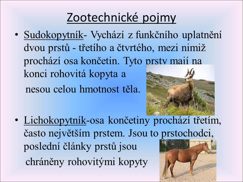 Zootechnické pojmy Sudokopytník- Vychází z funkčního uplatnění dvou prstů - třetího a čtvrtého, mezi nimiž prochází osa končetin. Tyto prsty mají na k