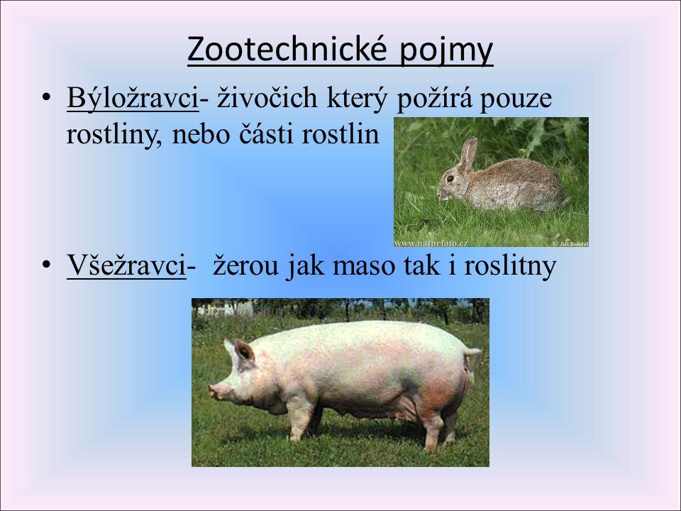 Zootechnické pojmy Býložravci- živočich který požírá pouze rostliny, nebo části rostlin Všežravci- žerou jak maso tak i roslitny